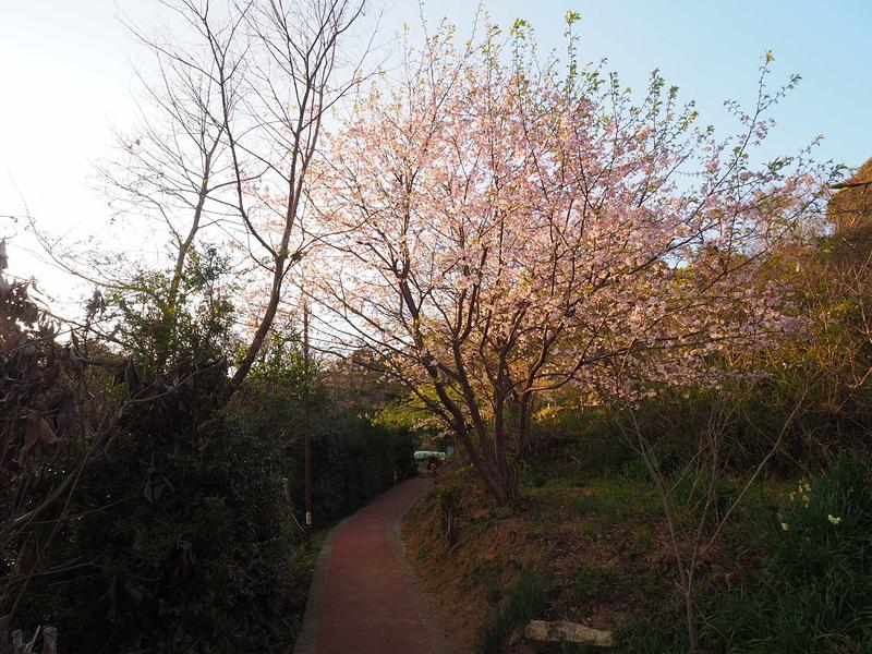 桜咲く登城路