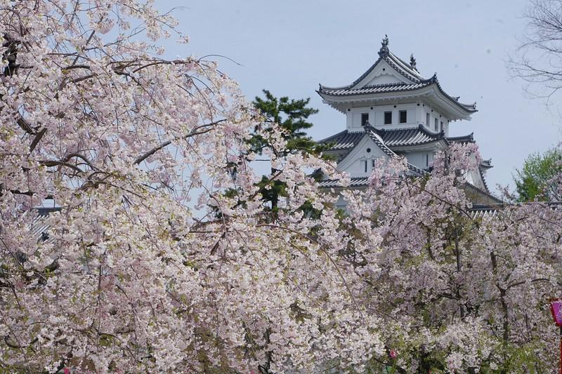 「大垣城 桜」の画像検索結果