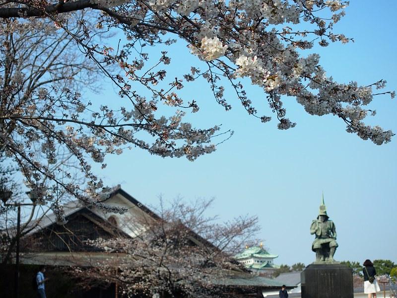 桜と加藤清正像と名古屋城