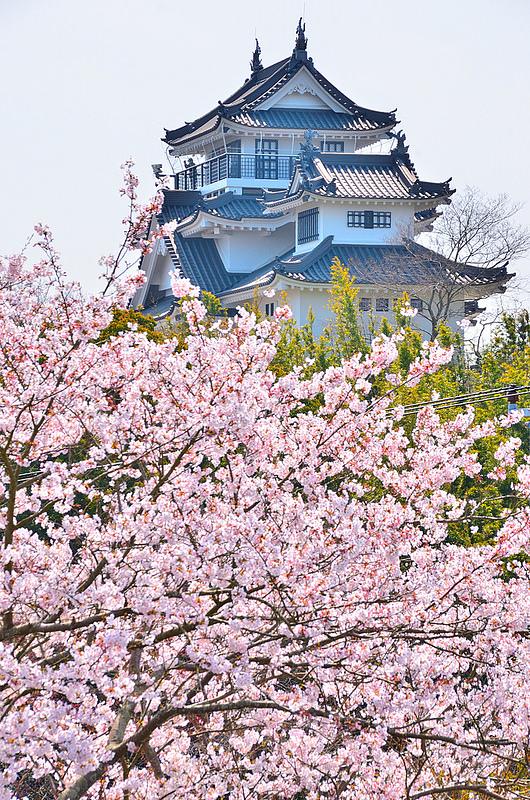桜と模擬天守を北から