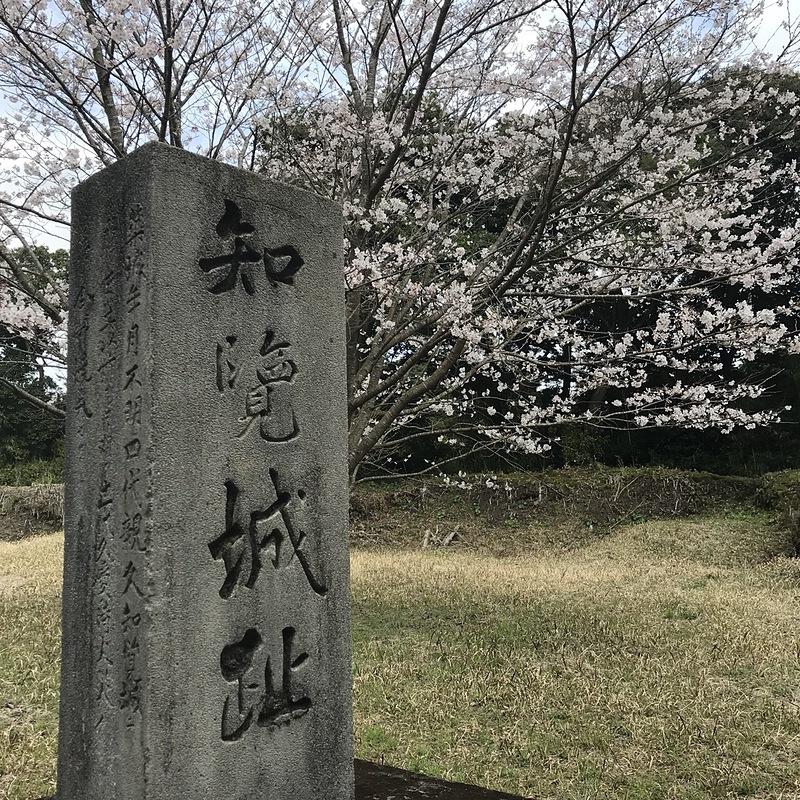 知覧城址石碑と桜