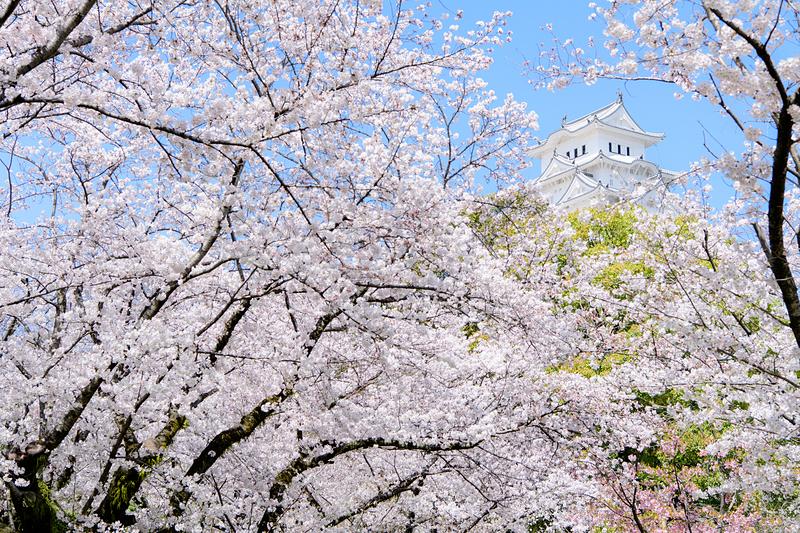 桜の翼[姫路城]