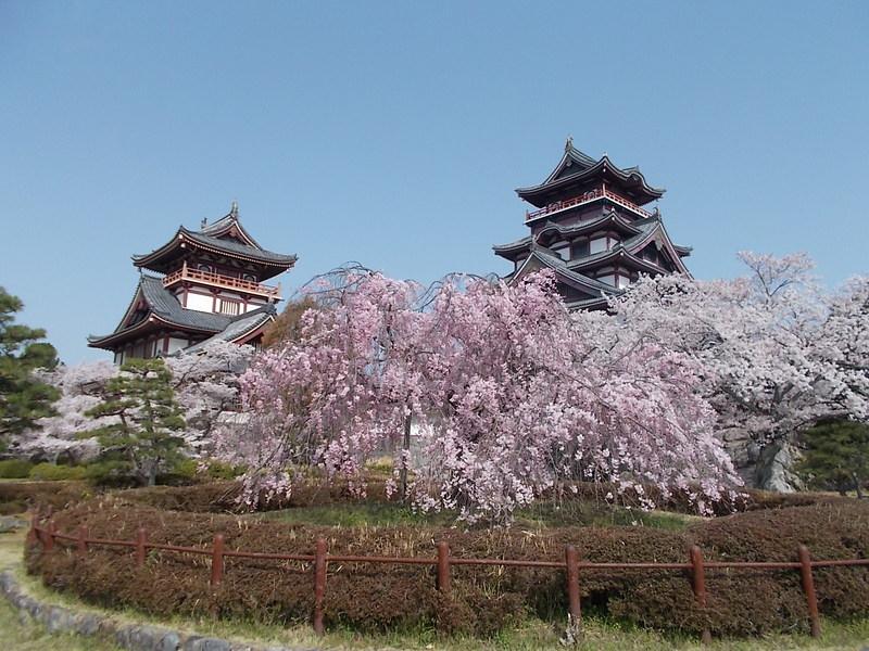 しだれ桜と天守