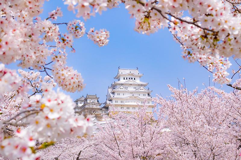春爛漫の白鷺城[姫路城]