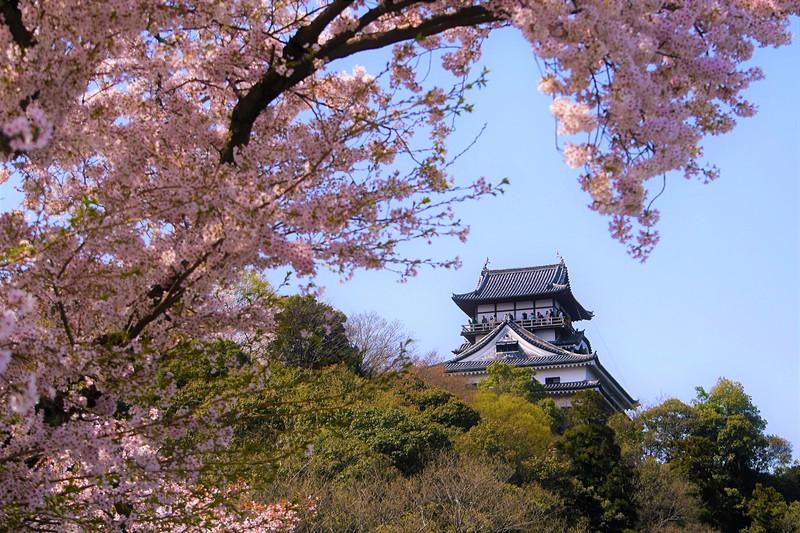 桜色の波しぶき