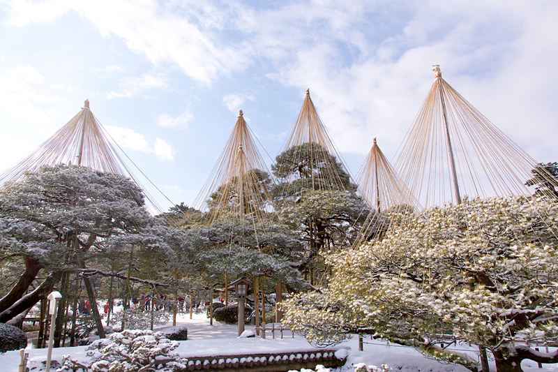 兼六園の雪吊り[金沢城]