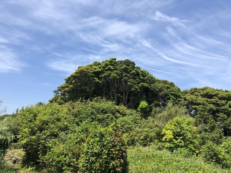 郭趾と思われる削平地からみた祠のある林