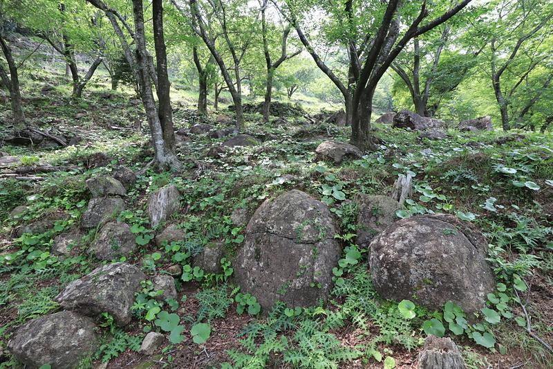 石がゴロゴロ