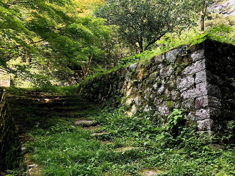 八幡曲輪石垣(七月)