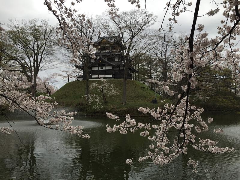 昼間の山楼と満開の桜(夜桜の翌日)