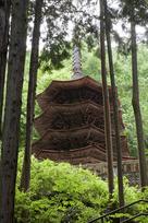 安楽寺(新緑)…