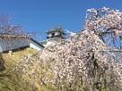 天守と枝垂れ桜…