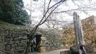 穴門とサクラ