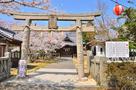 陽春の妙見神社…