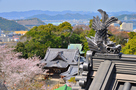 妙見神社と鯱瓦、山並み…