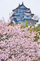 桜と模擬天守を北から…