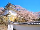 満開の桜と隅櫓…