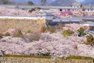 桜あふれて(1)…