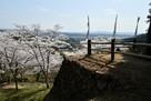 出丸石垣と桜