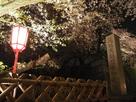 恩賜元離宮名古屋城の石碑と桜…
