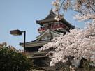 桜と清州城(北東から)…