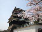 桜と清州城(北から)…