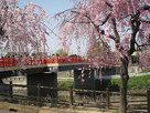 清州城西側の橋…
