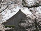 満開の桜の向こうの大書院…