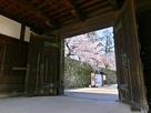 鯱の門内部から石垣の桜…