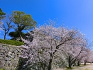 天守台下の桜並木…