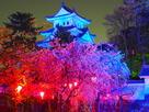 桜並木と天守(世界自閉症啓発デー・ブルー…
