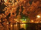 夜桜咲き乱れて…