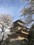 階段下からの天守と桜…