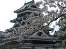 松本城の春①