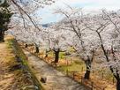 春の馬場・桜風景…