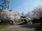 鋼門跡と桜