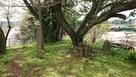 曲輪に立つ大森氏の墓石…