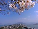 唐津城から虹の松原をのぞむ…