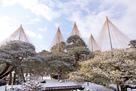 兼六園の雪吊り…