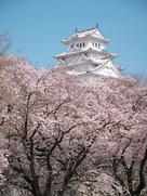 桜に埋もれる・・・…