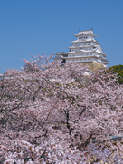 桜の山に立つ天守…