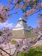 桜満開の向こうに天守…
