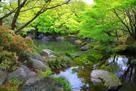 新緑の好古園(1)…