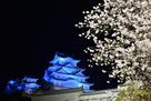 青鷺に夜桜