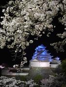 桜が降る青い夜…