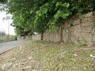 道路沿いの石垣…