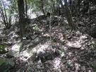 崩れ落ちた石垣…