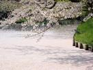 外堀の花筏