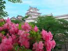 春惜しむ姫路城…