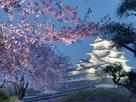 白鷺城、咲き誇れり。…